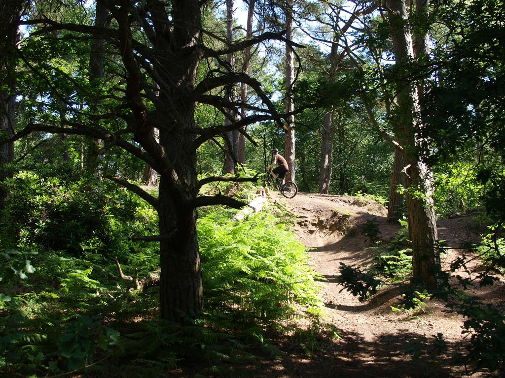 http://1.bp.blogspot.com/-hZzoiVDNfmE/TvQGWywh72I/AAAAAAAAAMQ/vaBFfC5jjrU/s1600/Forest%2BHD%2BWallpapers%2BFree%2BDownload%2BPAKISTAN.jpg