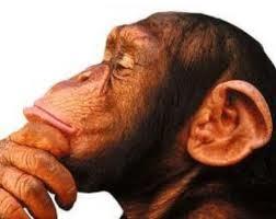 Los grandes primates,genocidio en marcha