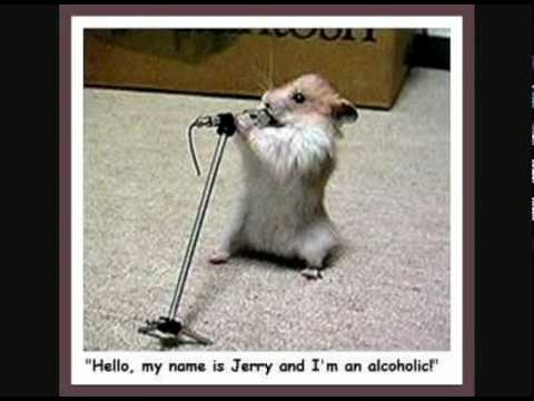 Cute Funny Animals with Captions