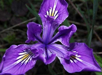 Beautiful Violet Flower Stills