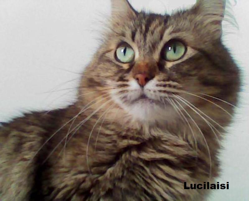 10 razones para adoptar a un gato abandonado