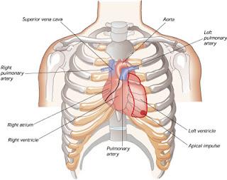 Efectos del agua fria sobre el corazon