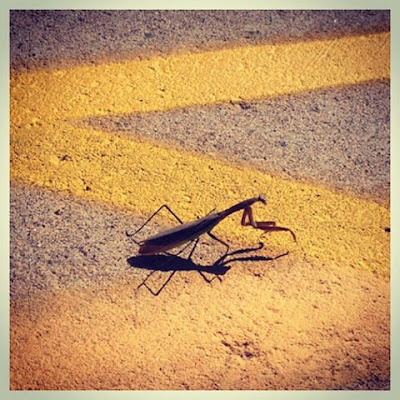 a study on the praying mantis