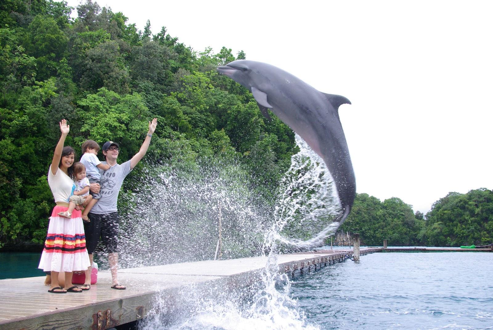 turning saipanese: Palau: Dolphin Bay