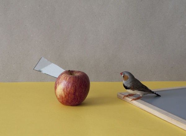 A bird and an apple