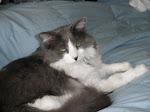 Guido Cat