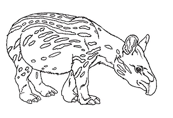 tapir and juvenile coloring pages - photo#18