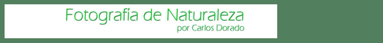 Fotografía de la Naturaleza de Carlos Dorado