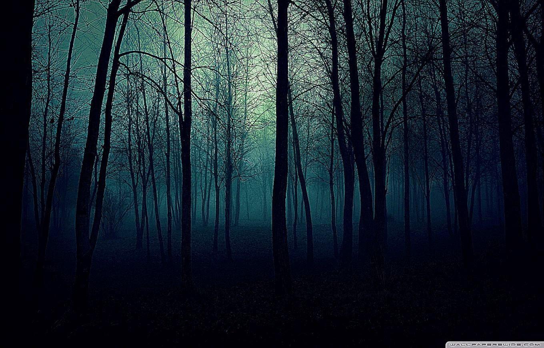 Hd Dark Forest Wallpaper Black Forest Wa...