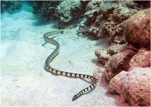 http://tipspetani.blogspot.com/2014/12/hewan-beracun-yang-berbahaya.html