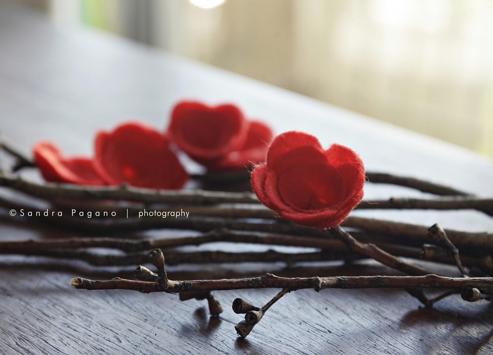 Dicas E Photos~ Rosas Vermelhas No Meu Jardim