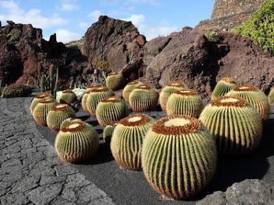 fotos diseños de jardines de cactus