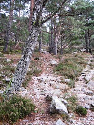Deeside, climb Craigendarroch