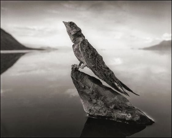 Natron lake calcified swallow