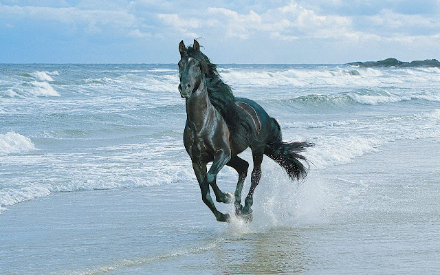 horses+wallpapers+%25287%2529