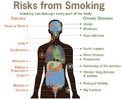 9 facts on why smoking is Smoking has largely become taboo in the western world but that has resulted in many people not knowing as much as they could about smoking itself these.
