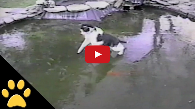 Tastefully Offensive Cat Slips And Slides While Chasing
