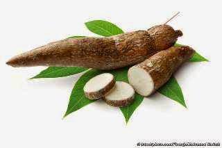 khasiat yang terkandung dalam buah singkong