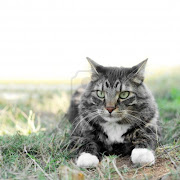 Look at Maine Coon Cats Photo Gallery.