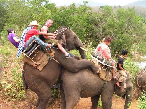 Sivertido paseo en Elefante