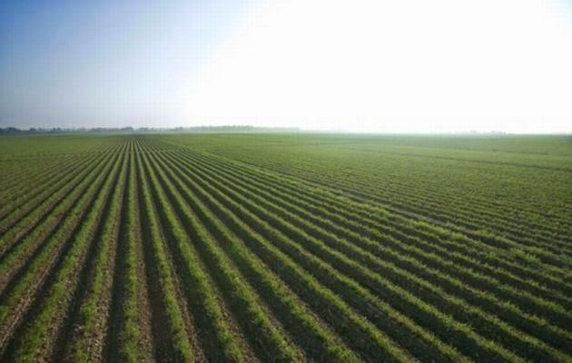 multinacionales, agricultura,