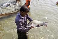 http://blog.worldfishcenter.org/2014/08/aquaculture-does-help-the-poor/