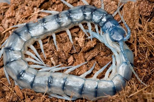 Arthropoda : Pengertian, Ciri-ciri, Klasifikasi, Reproduksi, Contoh