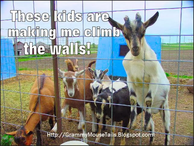 goat climbs wall dealing with crazy kids funny photo image