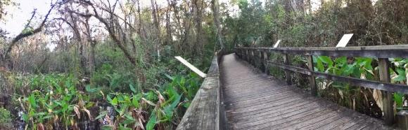Natur pur im Big Cypress Bend Boardwalk