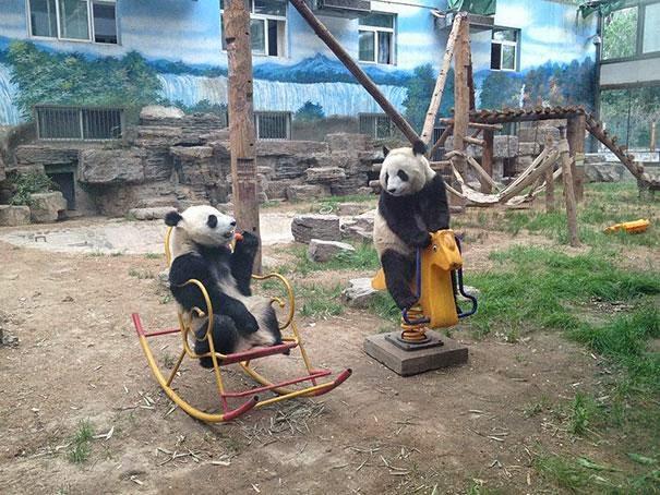 osos jugando con juegos infantiles