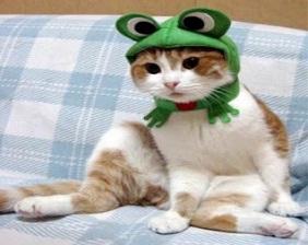 Me parece que he visto un lindo gatito