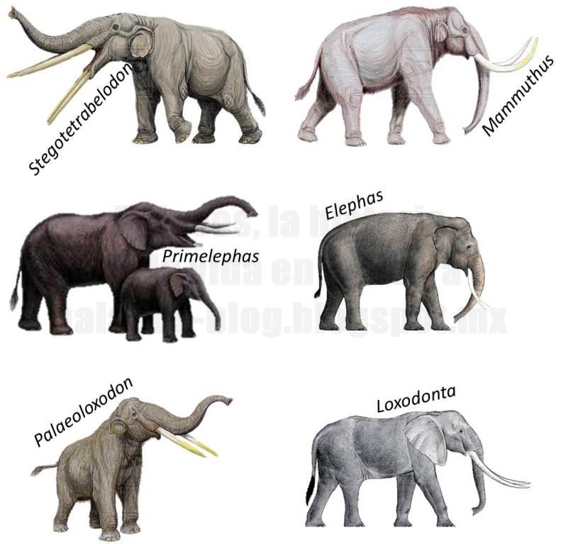 Palaeos, la historia de la Vida en la Tierra: ¿Sabías que? Elefantes 2