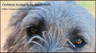 Cerberos Kutyaiskola Kecskemét