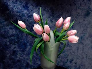 Pétalos rosas