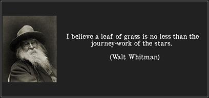 walt whitman and transcendentalism essay