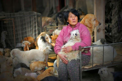 Kindhearted Woman Saves 100 Dogs From Being Eaten During Controversial Festival