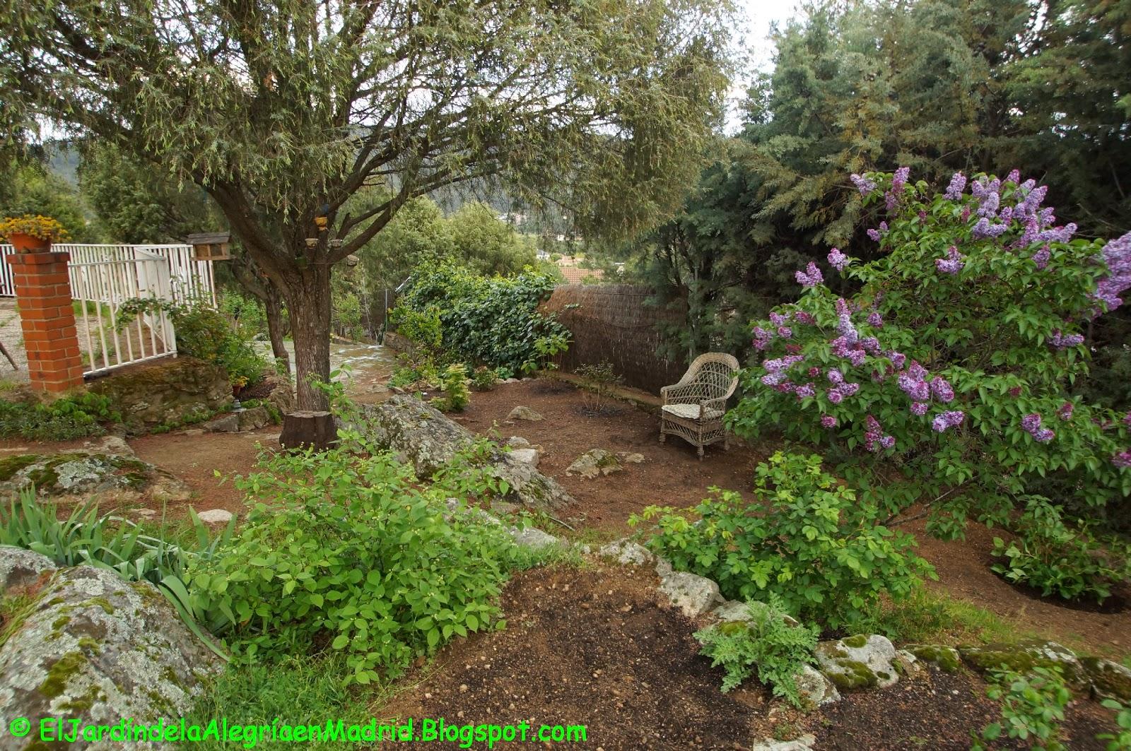 El jardín de la alegría : El camino de las acidófilas - photo#3