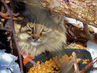 Park cat eats dry food