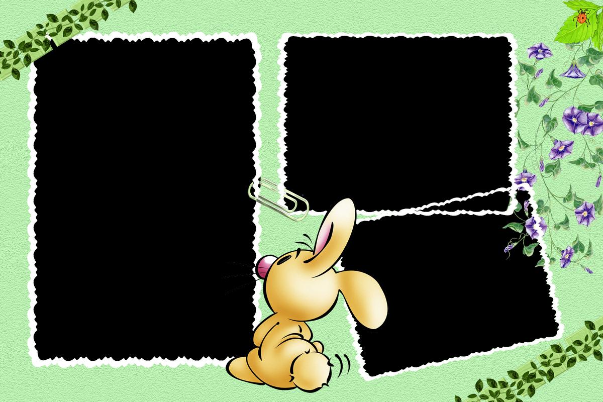 fondo de foto conejo