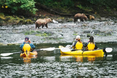 Alaska kayaking with bears in the distance