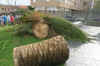 http://www.kizoa.es/Movie-Maker/d26495772kP217759094o2l1/talan-as-arbores