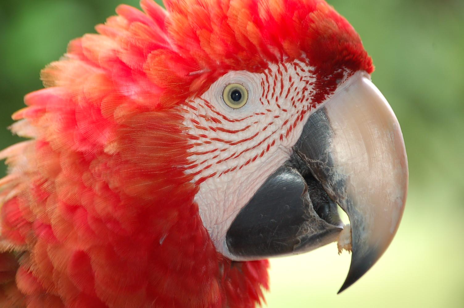 parrot heads http://lifeinthestressedlane.blogspot.com/2011_02_01 ...
