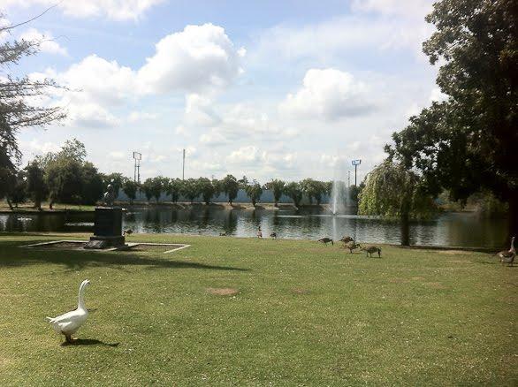 Roeding Park pond, Fresno, CA, goose
