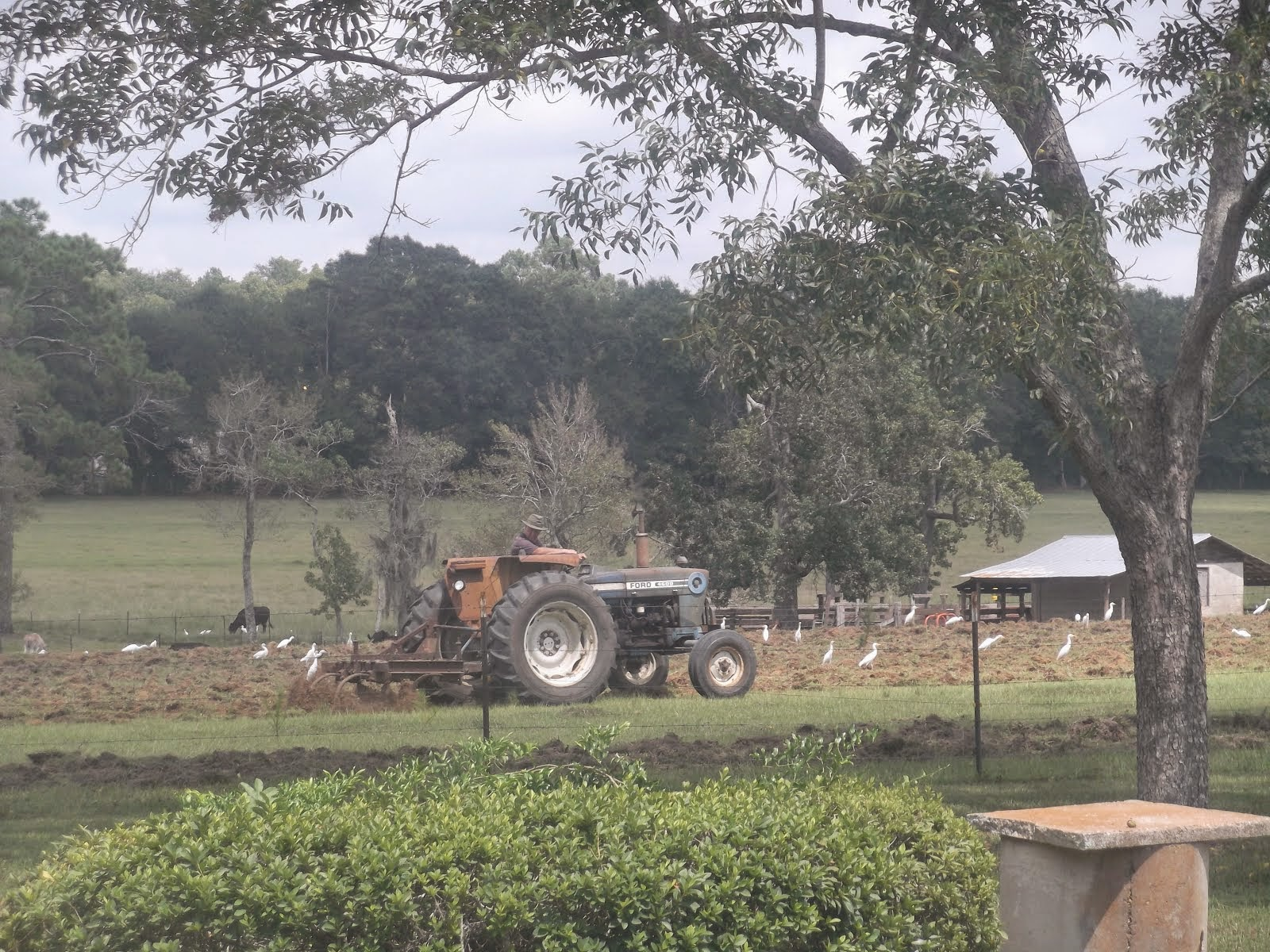The ranch where Elder Winterton & Elder Foster live.  Their landlord is on the tractor.
