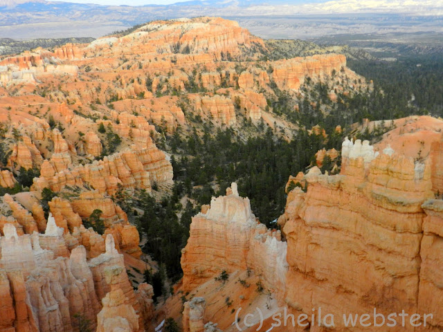 View of hoodoos and trees from Sunset Point