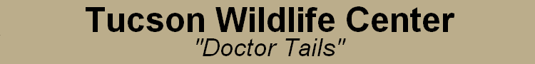 Tucson Wildlife Center: Doctor Tails