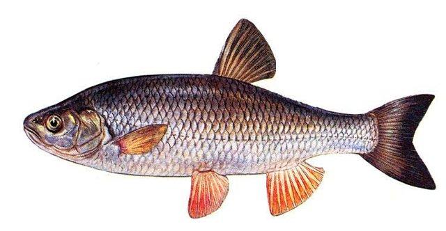 густой спрей-активатор fish xxl отзывы