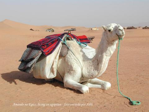 Amando no Egito,loving an egyptian II: Um homem arabe pra