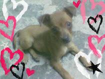 ♥ BROWNIE....BROWNIE.... ♥