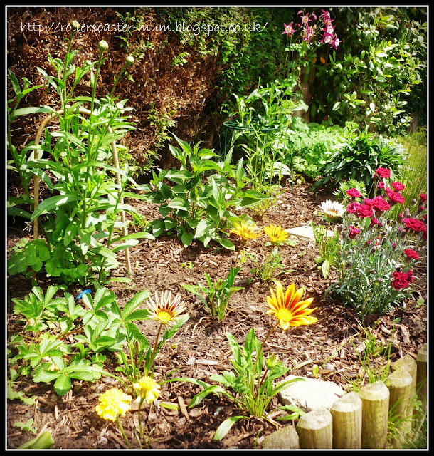 Perennials flower bed